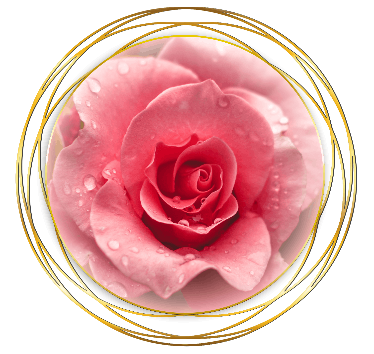 Venusian Rose Healing - The Rose Lineage
